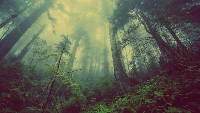 Преди два милиона години човекът е живял по дърветета