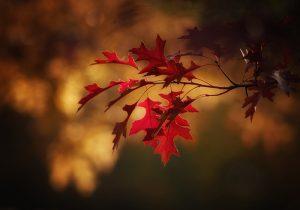 Пет начина да случи есента